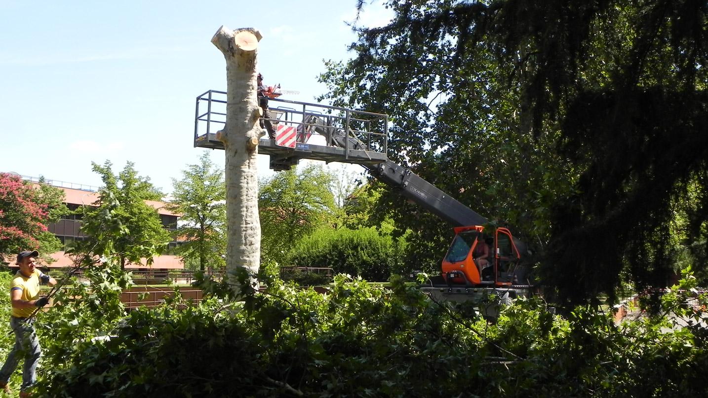 Abbattimento di un albero