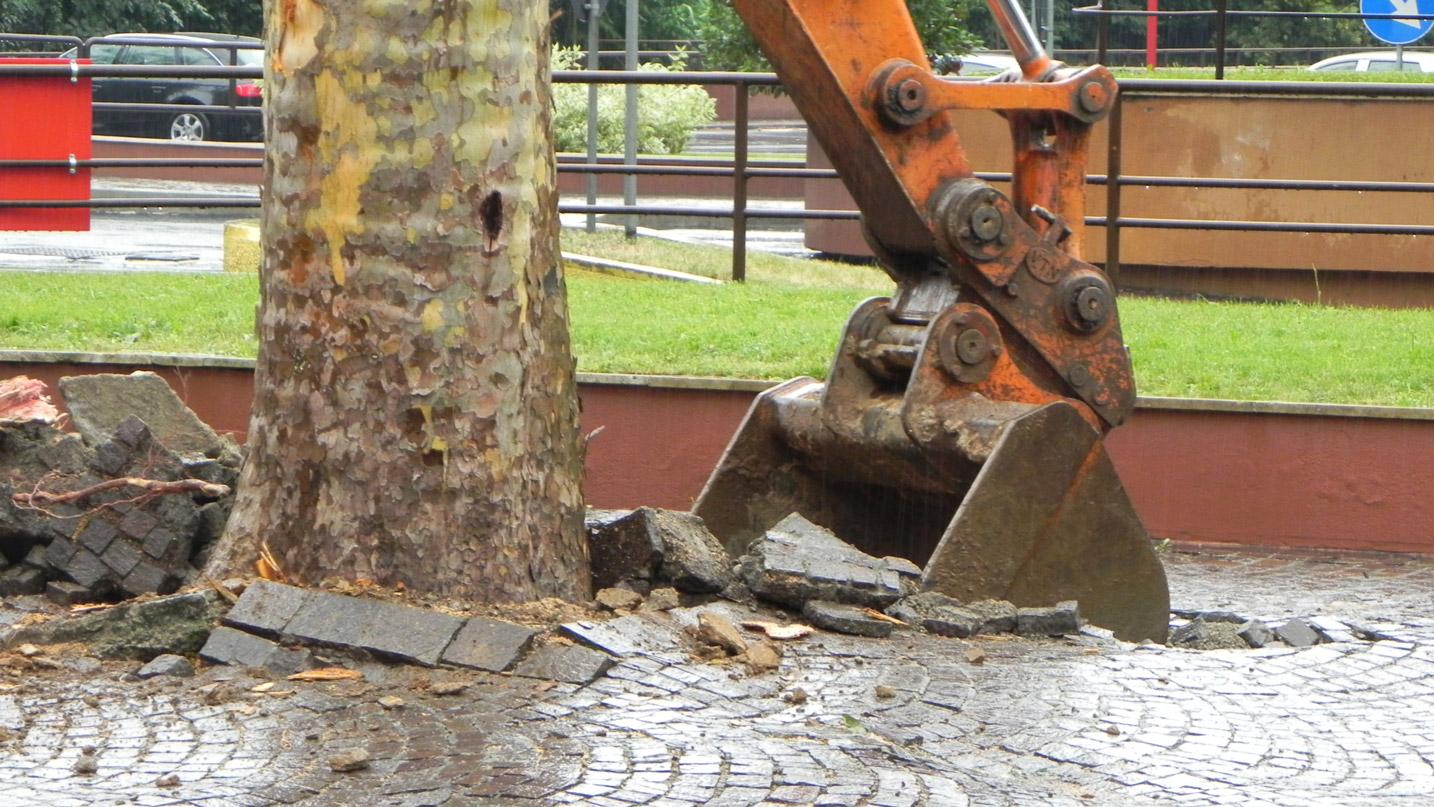 Rimozione tronco dal terreno