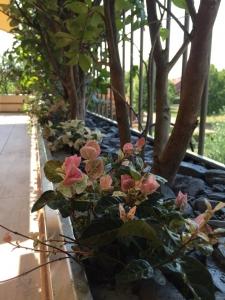 Dettaglio piante del terrazzo
